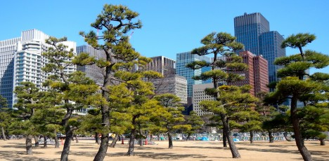 Tokyo stad träd