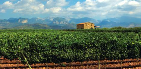 Mallorca vingård