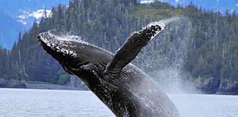 slidewhale alaska