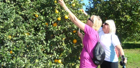 AS-FAO-bergspasset-apelsin