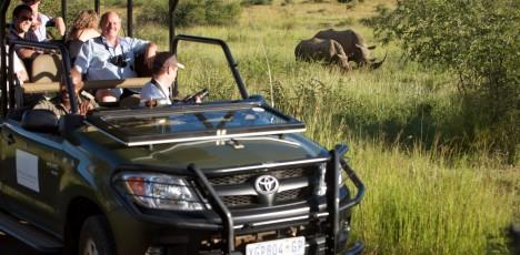 safari noshörningar
