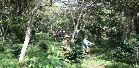 Kuba Guanayara National park