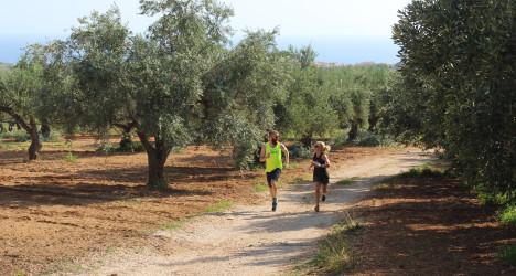 Training Camp Kalamata - löpning i olivlunderna